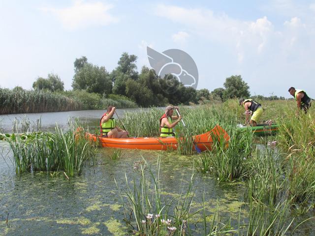 Canoe în Delta Neajlov